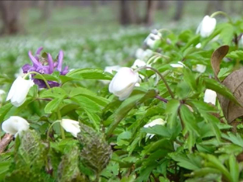 Wiosna w studenckim ogrodzie